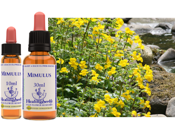 20. MIMULUS - strachy, fóbie